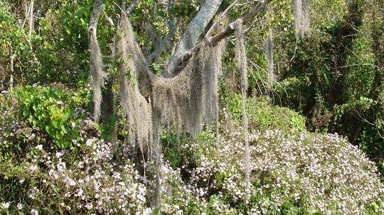 DeLand, FL: flora seen along the way