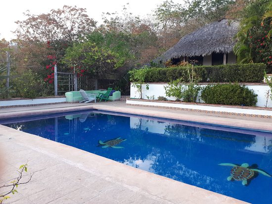 Puerto Angel, Mexico: Surprisingl clean, filled pool with amazing view from the deck. No one there!