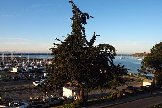 Oceano Hotel & Spa Half Moon Bay: Tree View!
