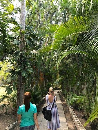 พิพิธภัณฑ์เฮอร์มิงเวย์ ฟินซา วิเกีย: Il sentiero per la piscina.