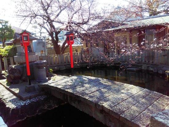 Fujii-dera Kannon Temple: P_20180324_083913_large.jpg
