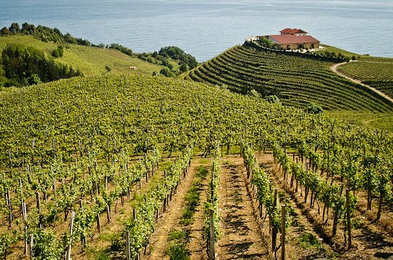 Basque Country Wine and Cheese Tasting Tour from San Sebastián