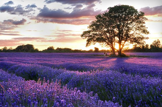 Provence Villages and Lavender Fields...