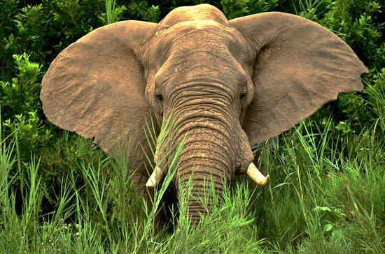 Hluhluwe Imfolozi 2 Days Safari