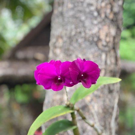 Sofitel Angkor Phokeethra Golf and Spa Resort: photo2.jpg
