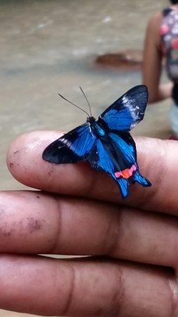 Carmen de Apicala, Colombia: Fauna