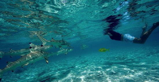Vaitape, French Polynesia: Shark and Ray spot, an awesome moment...