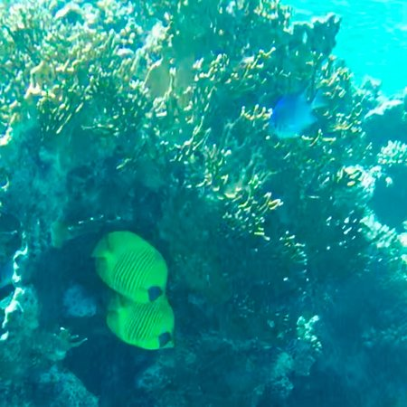 Coral Garden Resort and Dive Centre: photo1.jpg