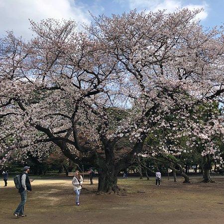 Shinjuku Gyoen National Garden: photo3.jpg