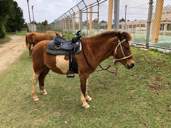 Kumejima-cho, Japón: 牧場の与那国馬