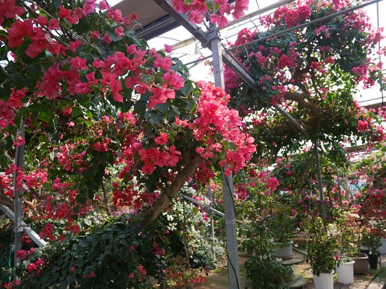 Bougainville no mori
