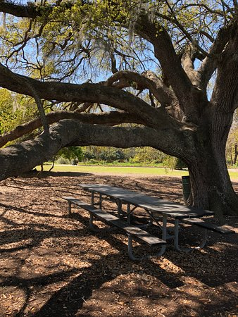 Picnic Table In The Shade Of A Huge Oak Tree Picture Of Hampton - Huge picnic table
