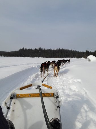 Fairbanks, AK: Dog sledding with Frisky Pups through pine and birch trees, around a frozen lake was absolutely