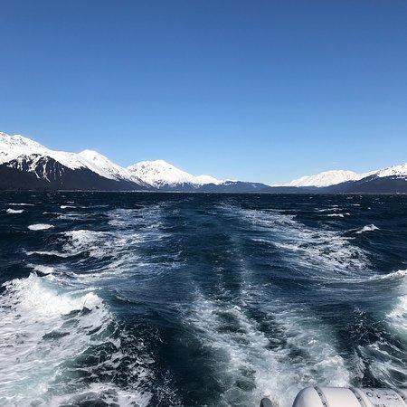 Major Marine Tours - Kenai Fjords Cruise Φωτογραφία