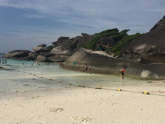 Sea Bees Diving Khao Lak - Day Tours: Similans