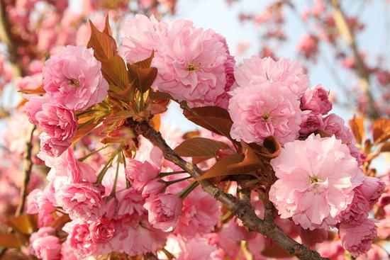 Crofton, Canadá: Spring has arrived