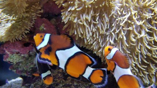 Seattle Aquarium: 20180324_114229_large.jpg