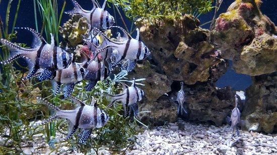 Seattle Aquarium: 20180324_114110_large.jpg