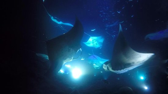 Kona Diving Company: Manta rays seen on the night dive