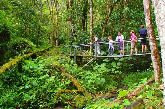 Cloud Forest Wildlife Hike