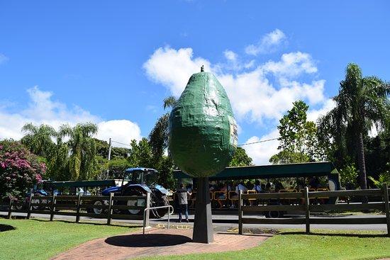 Tropical Fruit World: The Big Avocado