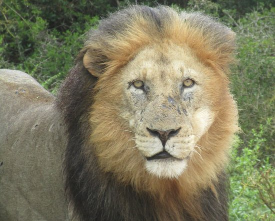 Colchester, Sudáfrica: Guess who came up close and personal!