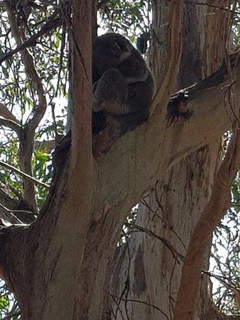 Cowes, Australia: 20180325_144939_large.jpg