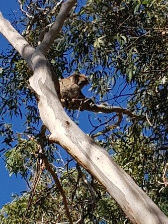 Cowes, Australia: 20180325_145417_large.jpg
