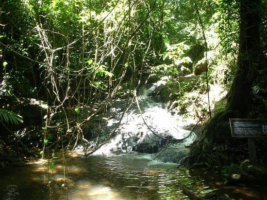 Tonsai Waterfall Khao Phra Thaeo National Park