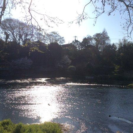 Kakitagawa Park: 綺麗な水ですね!