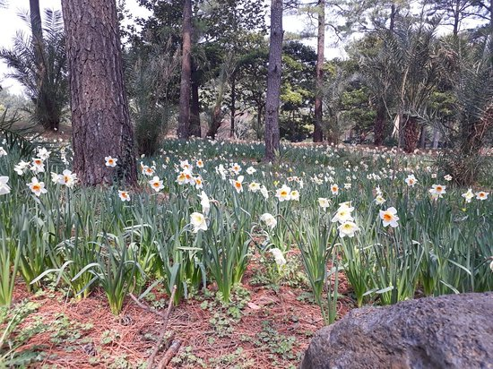 Hallim Park : Reccomended. Must visit when spring season especially on early April.