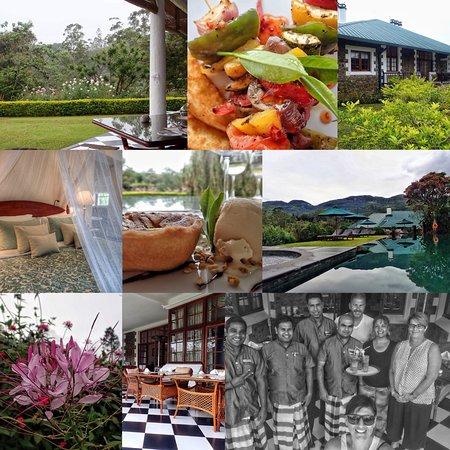 Ceylon Tea Trails - Relais & Chateaux : Collage of bungalow,food and garden