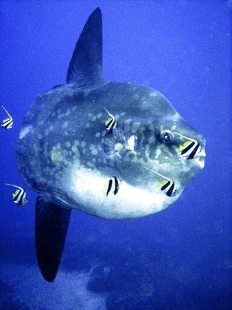 Lembongan Divers
