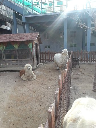 Dalian Forest Zoo : 20180317_083728_large.jpg