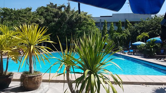 Palm Garden Photo