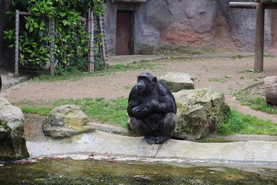 Chimpanzee - バルセロナ、バル...