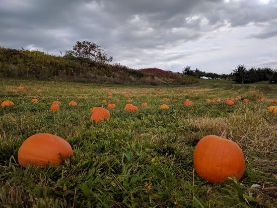 Red Hook, État de New York : Pumpkin Patch
