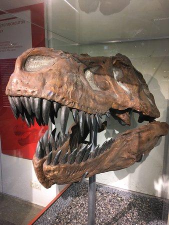 Lower Saxony State Museum (Niedersachsisches Landesmuseum Hannover): T-Rex