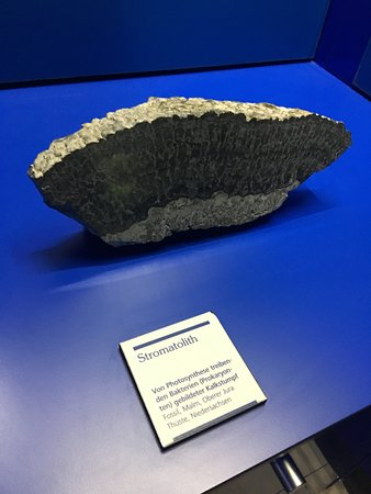 Lower Saxony State Museum (Niedersachsisches Landesmuseum Hannover): Stromatolith