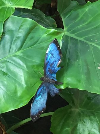 Santa Maria Suites Hotel: One of many beautiful butterflies at the Key West Butterfly Conservatory.