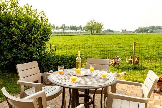 Jabbeke, Belçika: terras