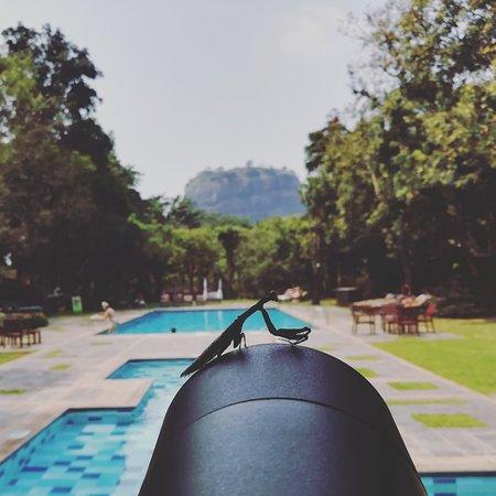 Hotel Sigiriya: IMG_20180324_132401_198_large.jpg