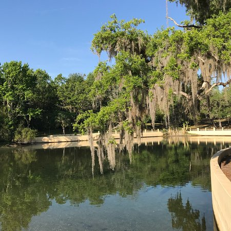 Salt Springs Recreation Area: Beautiful campground! We stayed at spot 135. Very spacious and private! Near swamp trail was an