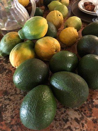 Lilikoi Inn: Papayas and avocados from Shais garden