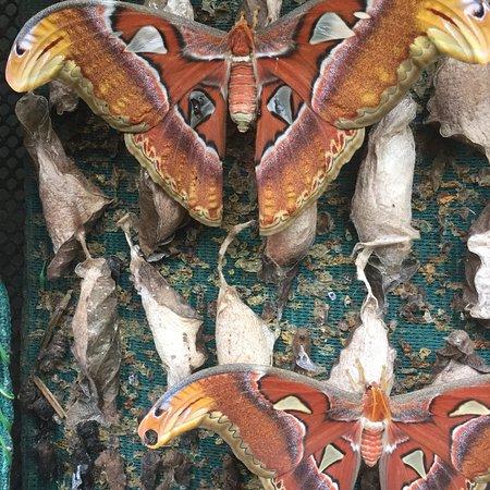 Kuala Lumpur Butterfly Park: photo2.jpg