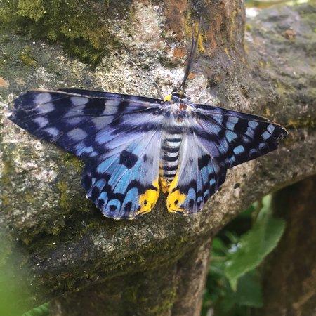 Kuala Lumpur Butterfly Park: photo3.jpg