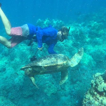 Maui Kayaks: Photos taken by us on our tour