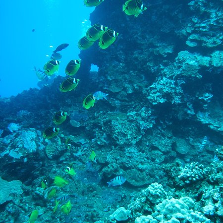 Hawaiian Rafting Adventures: photo7.jpg