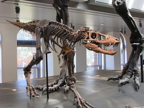 baby t rex picture of natural history museum of los angeles rh tripadvisor com