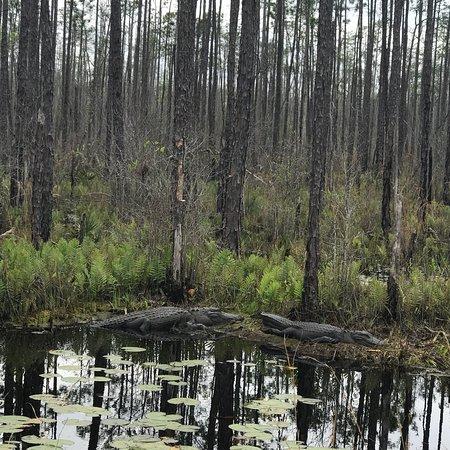 Okefenokee Swamp Folkston Ga Boat Tour